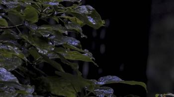 雫が滴る森の葉.jpg